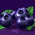 蓝莓口香糖